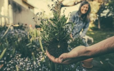 3 Reasons Why you Should Plant Your Own Garden